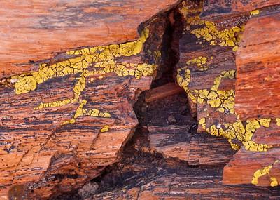 Petrified Forest, Arizona (March 2010)