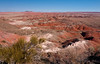 Painted Desert - Lacey Point