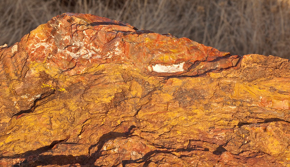 Petrified wood glowed under the late afternoon sun
