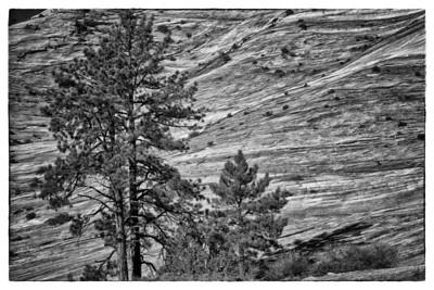 Zion Canyon (January, 2014)