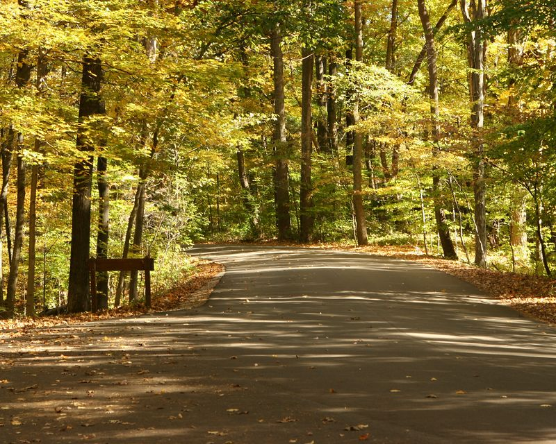 A view of the road near the parking lot above the waterfall.  The fall colors of the tree canopy gives a golden glow to the scene.