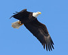 This eagle has a rather small fish in his talons.