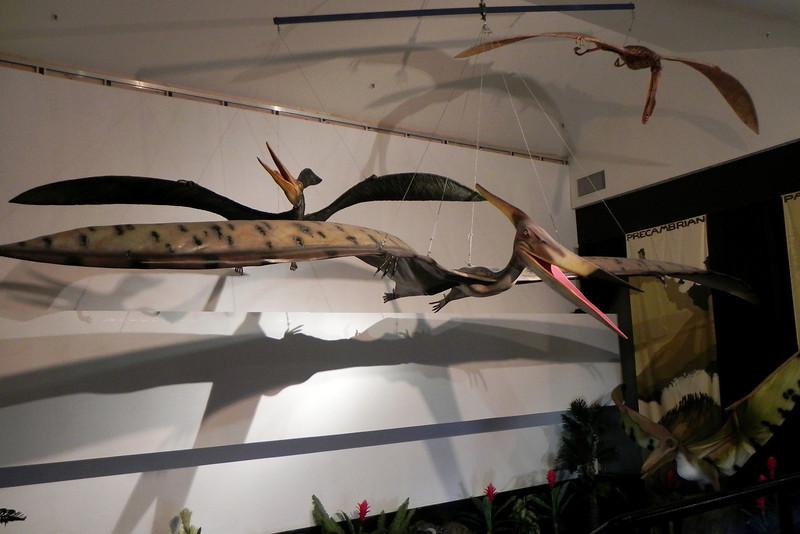 N2716_National Dinosaur Museum, Canberra E