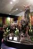 N2697_National Dinosaur Museum, Canberra E