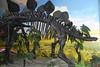 N2686_National Dinosaur Museum, Canberra E