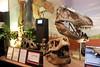 N2708_National Dinosaur Museum, Canberra E