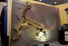 N2690_National Dinosaur Museum, Canberra E