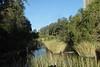 15/08/2017 - Platypus Pools under Irving Bridge, Richmond River, Casino NSW