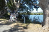 13/08/2017 - Community Thong Tree at Chatsworth on the banks of the Clarence River