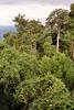 1997 Jul - Dorrigo Forest Walk