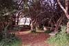 1997 Jul - Lovely Sitting Area at Dangar Falls, Dorrigo