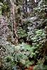 1997 Jul - The Bush at Dorrigo Forest Walk