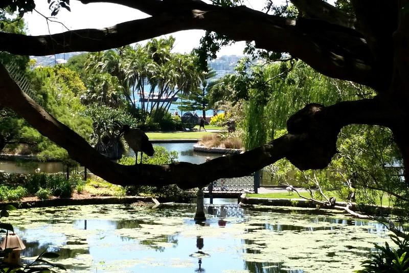 24/11/2017 - The view from the Rose Garden Restaurant, Sydney Botanical Gardens