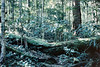 1989 May - Temperate Rainforest at Mt Glorious<br /> (This was a great slide but all my slides were attacked by fungus while we were living in Bundaberg)