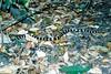 1995 Jan - Bandy Bandy Snake at Cania Gorge