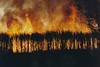 1994 Jul - Cane Fire, Bundaberg