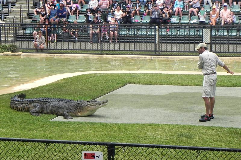 02/09/2016 - Saltwater Crocodile show at Australia Zoo, QLD