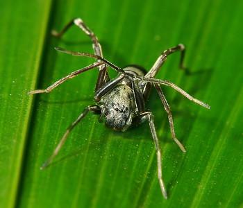 Unidentified Spiders