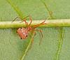 Spider top 1280642_filtered