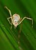 smiley spider 12605942_filtered