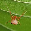 some spiderP1280653_filtered
