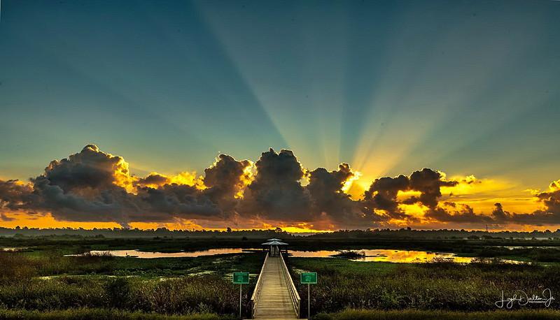 Cattail Marsh at Sunrise