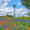Bluebonnets & Windmill - New Ulm,  Texas
