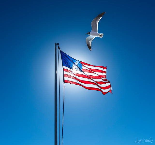 While riding the ferry from Galveston to Bolivar, there are always lots of sea gulls following the boat.  I stepped out of the truck and saw the flag , the sea gulls, the sun and a composition waiting to happen!