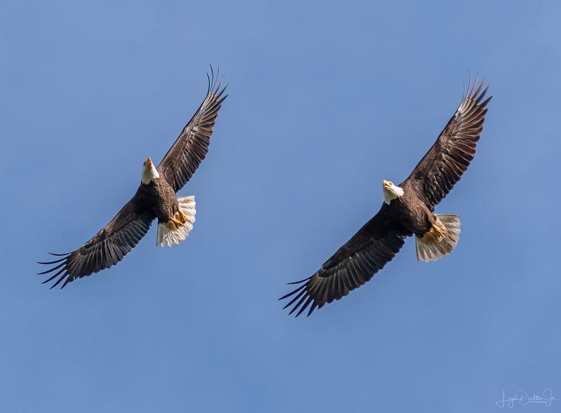 Waller County Bald Eagles