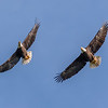 Waller County Bald Eagles