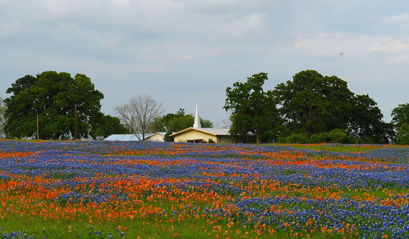 Bluebonnets & Indian Paint Brush – Two of Texas' springtime favorites!