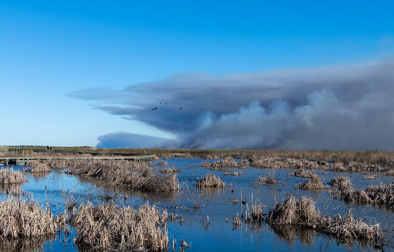 Prescribed Burn at Anahauc National Wildlife Refuge