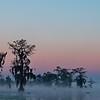 Cypress Island Preserve on Lake Martin, Breaux Bridge, Louisiana