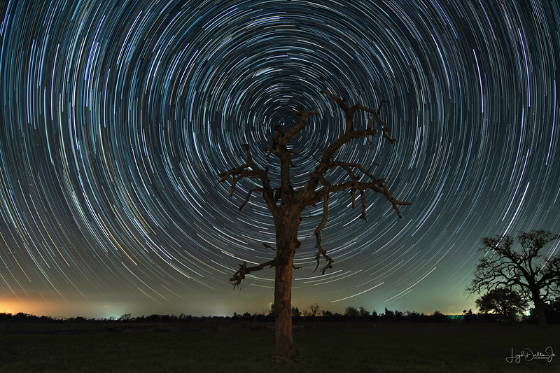 Star Trails over the Old Dead Tree