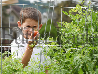 Harold Aughton/Butler Eagle: John Fouse, 7, a second grader at Butler Catholic, examines a tomatoe he picked in the school's vegetable garden Tuesday morning.