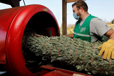 Wes Sherry of Cypher's Tree Farm feeds a tree through a tree-wrapping machine Thursday. 12/11/20
