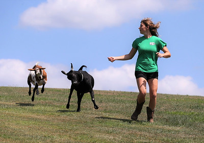 Butler County 4-H member and Knoch High School junior Kendyl Steighner, 16, of Saxonburg excersises two of her goats Po and Sprout(right) in her family's back yard Saturday. Steighner started raising goats in seventh grade with Po, now 3. Her herd currently includes nine goats, including two  baby goats born last Friday. Seb Foltz/Butler Eagle 08/08/20