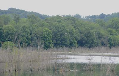 A heron flies over Glade Run Lake. Julia Maruca / Butler Eagle