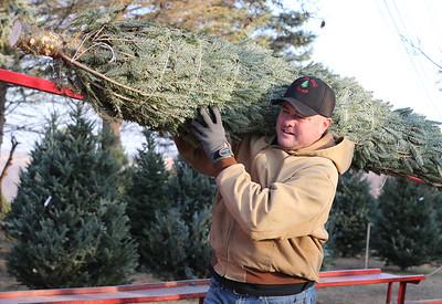 Ken Dambaugh of Pine Hill Farms carries a Christmas Tree to a car Thursday. Seb Foltz/Butler Eagle 12/11/20