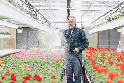 Schnur's Greenhouse owner Jim Schnur waters flowers Thursday at their farm in Summit Township Thursday. Staff was on hand preparing the greenhouse for spring. Schnur said that Covid-19 lead to a significantly increased interest in gardening last year. A trend he hopes will continue this spring. Seb Foltz/Butler Eagle