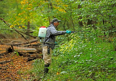 Jennings Environmental Center manager Wil Taylor sprays for invasive Japanese Knotweed along the edges of Big Run at the environmental center Wednednesday. Seb Foltz/Butler Eagle  09/30/20