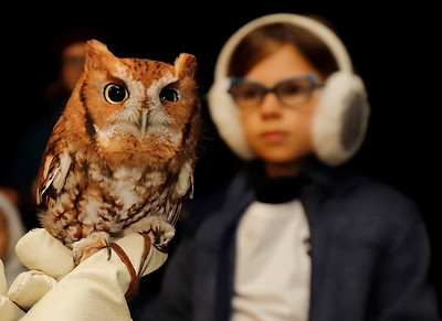 Audubon Society of Western Pennsylvania education director Chris Kubiak shows a screetch owl to guests at Succop Nature Park's Creatures of the Night event Saturday. Seb Foltz/Butler Eagle 10/24/20