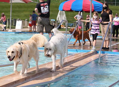 The Costanzo family golden retriever Winston,3, leads his new golden doodle friend Fenway, 6, across a catwalk at the Cranberry pool during Saturday's Puppy Plunge, while Kacie Fenway, 8, and her mom Erika Costanzo watch. Seb Foltz/Butler Eagle 09/12/20