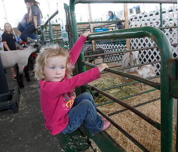 The Farm Babies, especially the goats catch Haddyson McLean, 3, attention at the Silver Dollar Fair Tuesday May 24, 2016 in Chico, Calif. (Emily Bertolino -- Enterprise-Record)