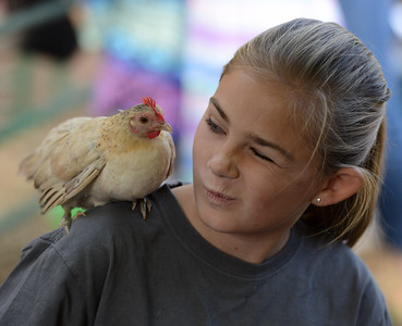 "Chico 4-H member Emery Doornbos, 12, winks at ""Cream Soda"" a chicken perched atop her shoulder Saturday, Nov. 5, 2016, at the Farm City Celebration Harvest Festival at the Bidwell Mansion State Historic Park in Chico, Califronia. (Dan Reidel -- Enterprise-Record)"
