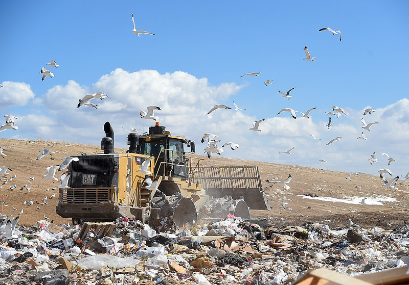 Seagulls fly around as a trash compactor moves debris around in the tipping area or working face Tuesday, March 19, 2019, at the Larimer County Landfill in Fort Collins.  (Photo by Jenny Sparks/Loveland Reporter-Herald)