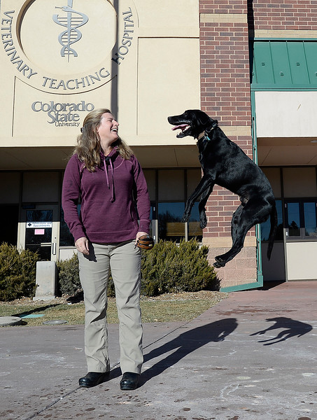 Endo, a 6 year-old black labrador who is known for his jumping, jumps in excitement as his owner, Martha Seim, left, laughs on Thursday, Jan. 3, 2019, outside the Colorado State University Veterinary Teaching Hospital before a check up in Fort Collins. His owners, Martha and Howard Seim III say he has been jumping for as long as they can remember.  (Photo by Jenny Sparks/Loveland Reporter-Herald)
