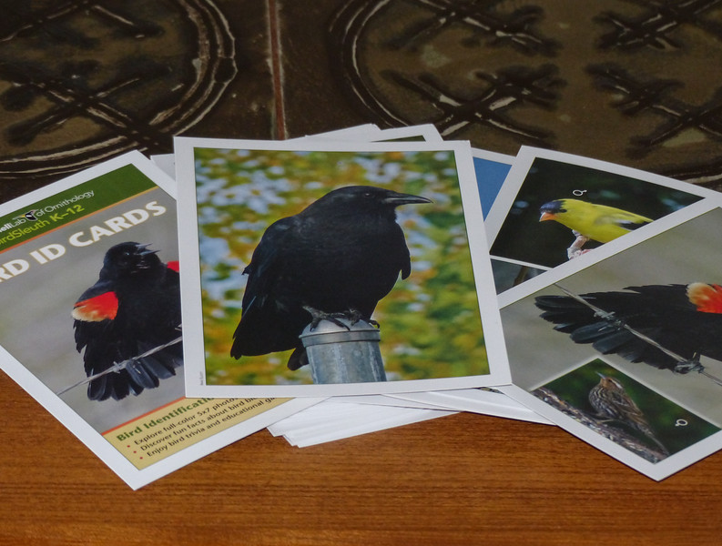 62  Cornell Lab of Ornithology Bird ID Cards