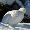 18  White beauty