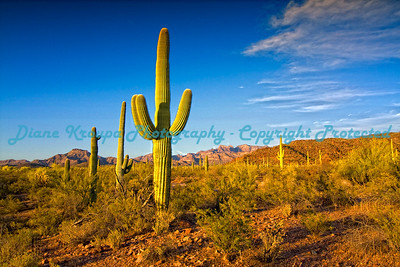 Organ Pipe National Monument - Ajo, Arizona.  #AZ002